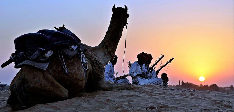 Kamele Wüste Indien