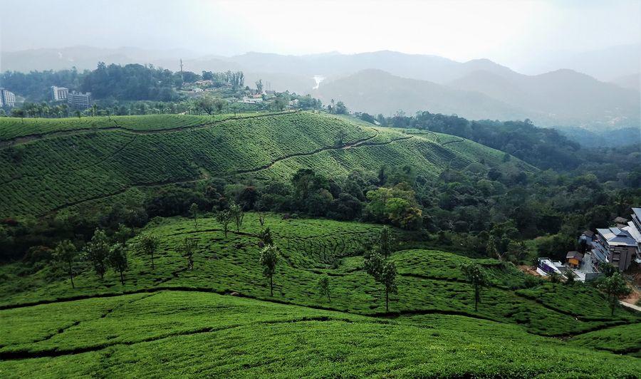 Teeplantage Indien